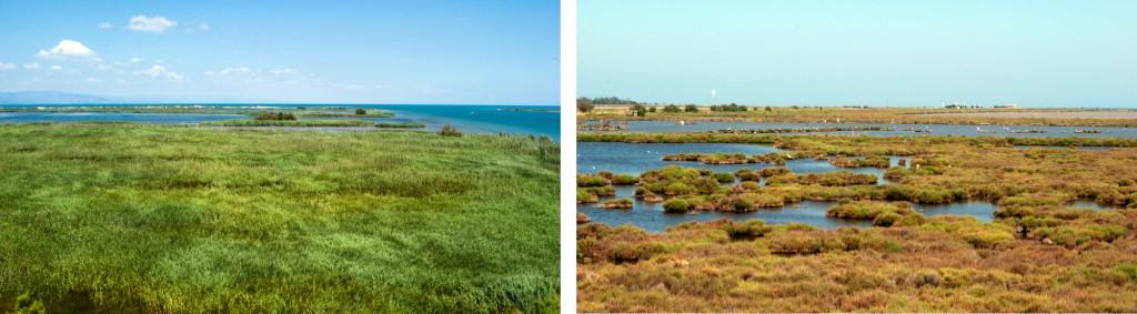 ecoturismo en el delta del ebro
