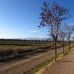 Paisaje característico de las tierras de los ríos Ebro y Queiles, donde el Moncayo domina el paisaje durante el trayecto.